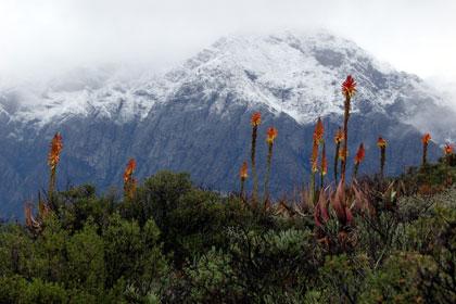Desert Plants Are Waterwise. The Karoo Desert National Botanical Garden ...