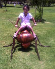 Big bug at walter Sisulu NBG