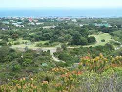 View over Garden from Fynbos Trail
