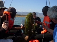 Hydrilla team in action