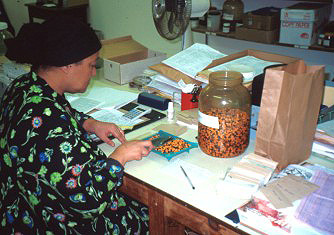 Counting strelitzia seed for a seed order
