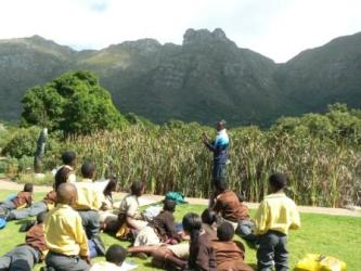 Learners investigate a wetland in Kirstenbosch