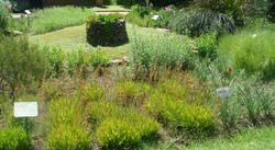 Medicinal garden of free state NBG