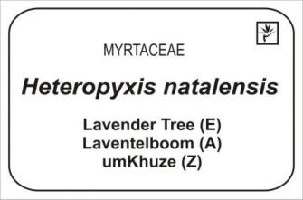 Traditional plant label