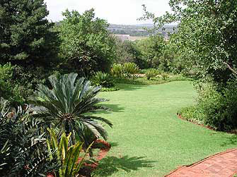 Cycad Garden scene