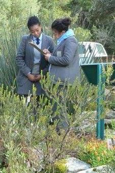 Learners investigating threatened plants