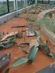 Ian Reddihough Welwitschia House
