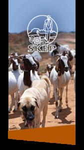 SKEP Anatolian Dogs