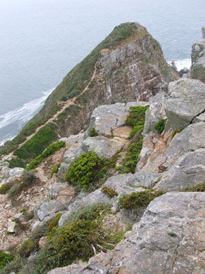 Cape Point Nature Reserve, near the light house, habitat of the black girdled lizard (Cordylus niger).