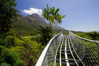 Work on the Treetop Canopy Walkway at Kirstenbosch National Botanical Garden has been progressing steadily over the past few months and is expected to be ... & Kirstenbosch Treetop Canopy Walkway promises spectacular views | SANBI