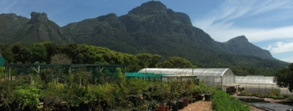 Collections Nursery, Kirstenbosch