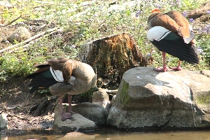 KZN-NBG Rehabilitated wetland