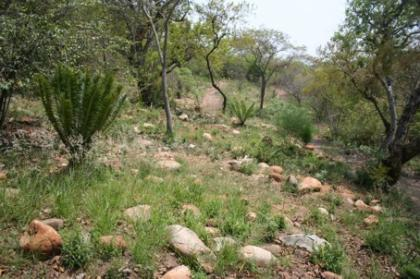 Dry Bushveld Area
