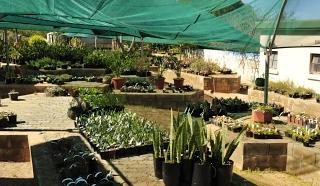 Plant sales nursery