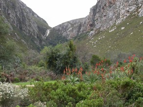 Krantz Aloe and leopard's kloof waterfall