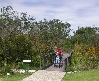 Wheelchair visitor on the wetland boardwalk