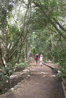 Visitors walk forest path in Disa Kloof
