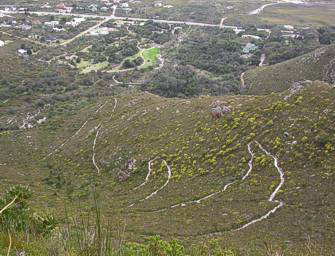 Fynbos and Zigzag Trails from mountain top