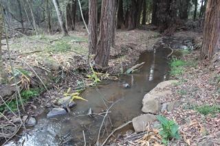Dorpspruit river