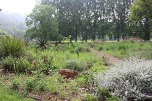 Grassland bed