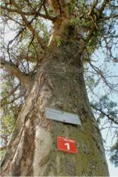 Labeled trees on the Tree Route