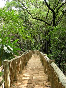 SAPPI aerial boardwalk in the African Rain Forest