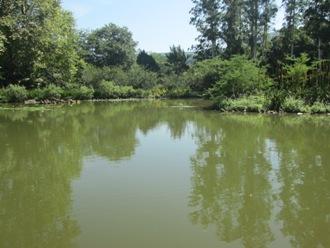 kzn wetland
