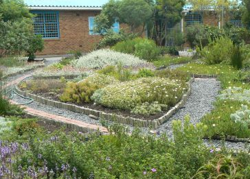 Imperial Primary school garden after two years of growth.