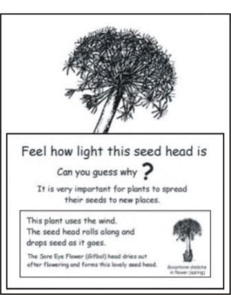 Seed head label