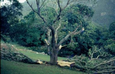 Storm damage May 1984