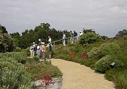 Table Mountain volunteers are guided through the Dune Garden