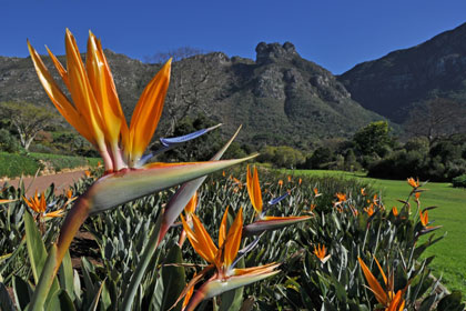 Kirstenbosch National Botanical Gardens - Things to do in Cape Town for kids