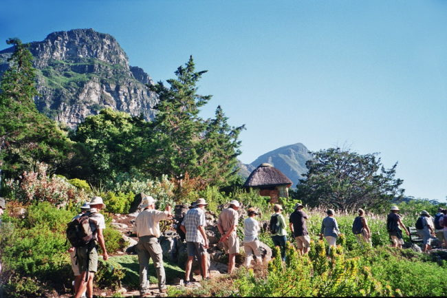Kirstenbosch Bird Walks