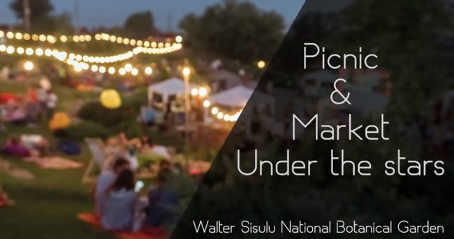 Picnic & Markets under the stars