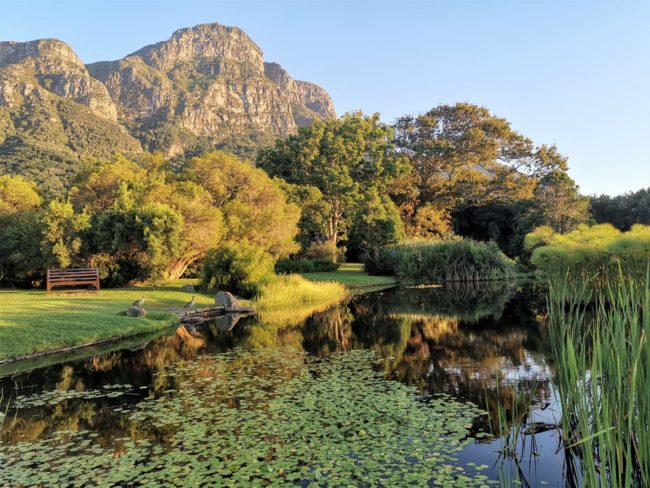 """Free Entry at Kirstenbosch for """"iNatters"""" participating in the City Nature Challenge"""