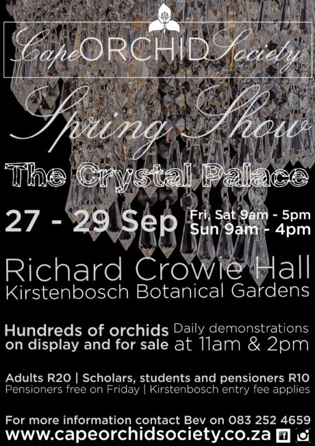 Cape Orchid Society Spring Show 2019