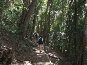 www.sanbi.org/kirstenbosch-nbg-yellowwood-trail/